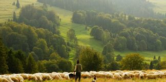Lahan Pertanian picture